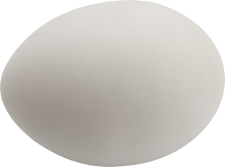 Chicken_egg
